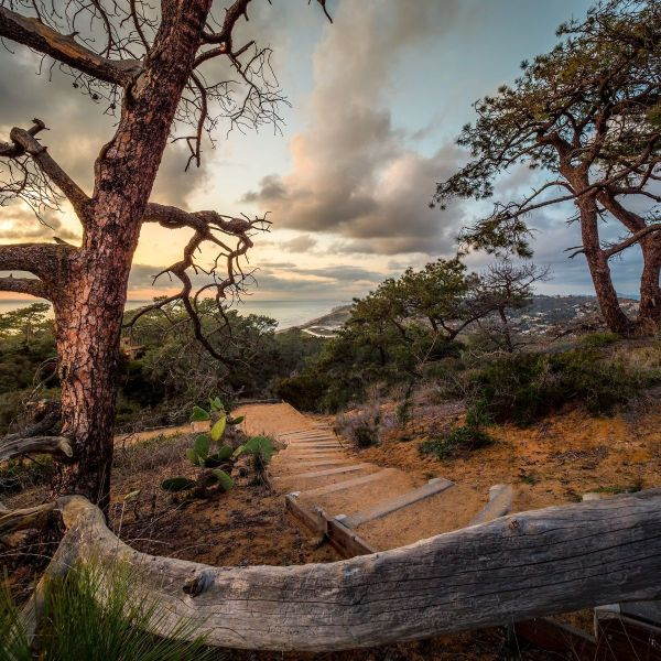 Best hikes in san diego - Torrey Pines hike - Los Penasquitos canyon trail, cedar creek falls and more. This image is of a beautiful golden hour at Torrey Pines State Nature Reserve. A trail going down a hill with steps and the Pacific ocean in the background.