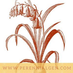PG logo 2
