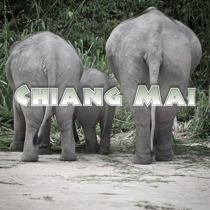 Chiang Mai, elephant sanctuary, Thailand, travel
