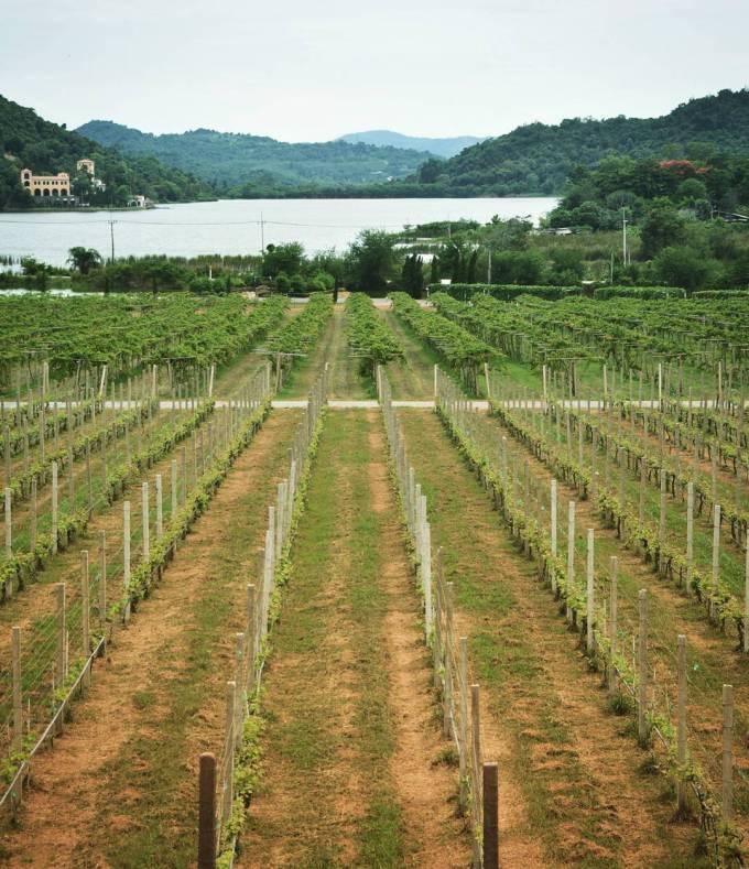 Silverlakes winery Pattaya Thailand wine