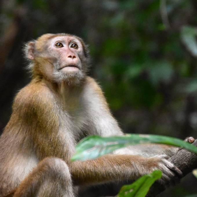 Kanchanaburi, Erawan Falls, Thailand, travel, monkey