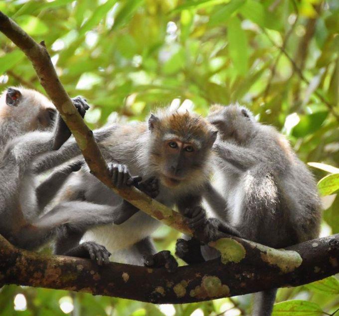 Monkeys, Jungle, Singapore, Travel