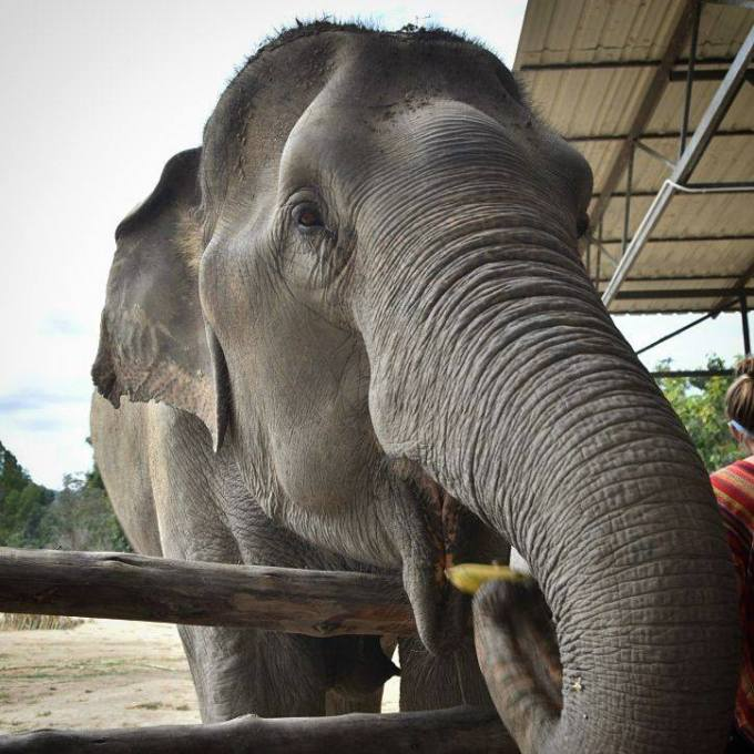 Chiang Mai, Thailand, elephant sanctuary, travel