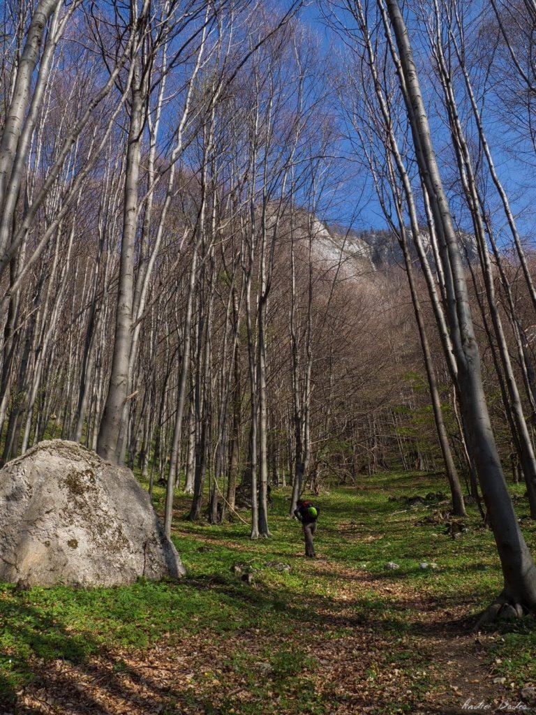 8 - Verticale în Postăvaru: Muchia Panseluței și Muchia Căprioarei
