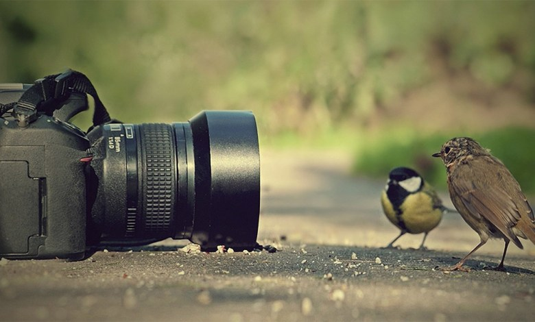 Photo of Recomandare fotograf în Baia Mare