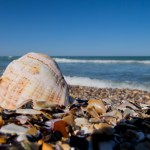 <b>learning to slow down in Vama Veche</b>