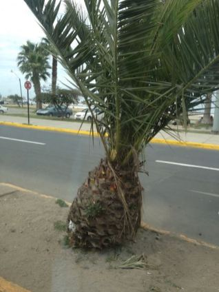Coquimbo Chile 2014 - 171