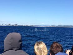 Gold Coast 2015 - 412 of 608