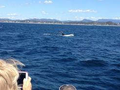 Gold Coast 2015 - 535 of 608