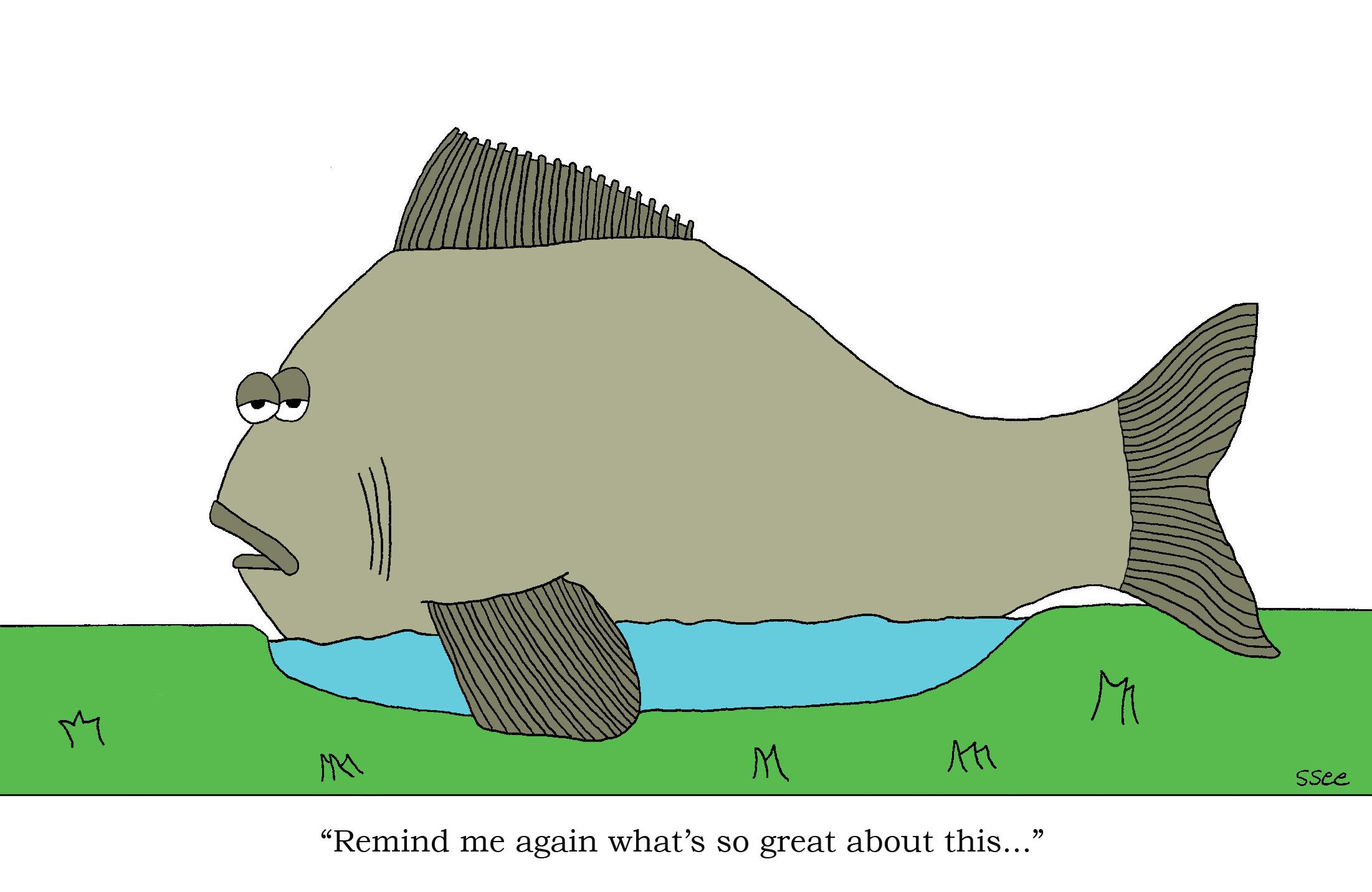 Big fish big pond andrew wittman for Big pond fish
