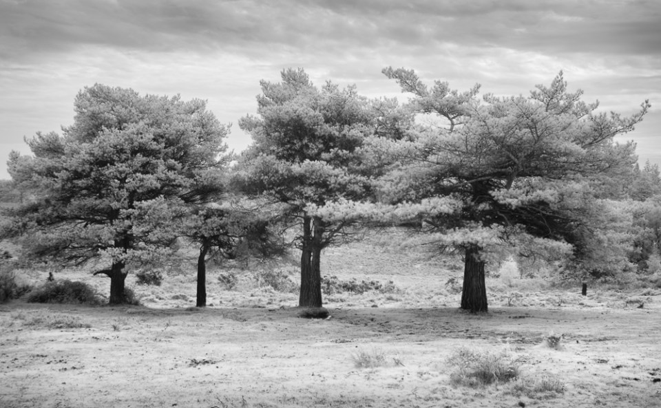 10 New Forest Trees