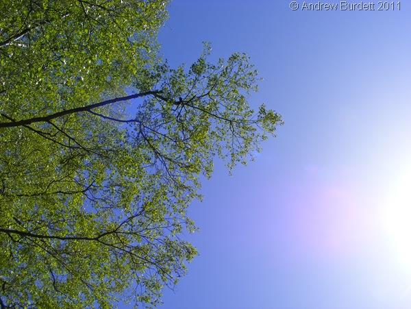 BLUE SKIES_This week's Photo of the Week.