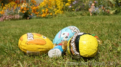 FOUND THEM!_Mum organised an Easter egg hunt on the lawn.