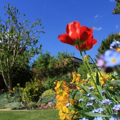 A beautiful day in the garden.
