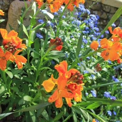 Flowers blooming in the garden.