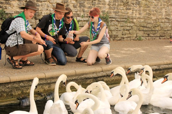 Four of the Finns feed swans at Windsor riverside.