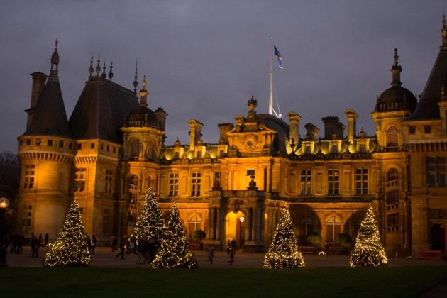 A row of illuminated firs at the top of the Waddesdon Manor driveway.