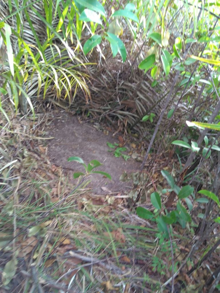 Missionary Andrew and the Secret Trails