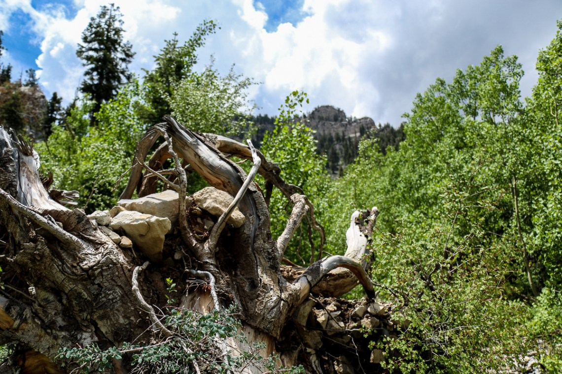 Cathedral Rock at Mount Charleston