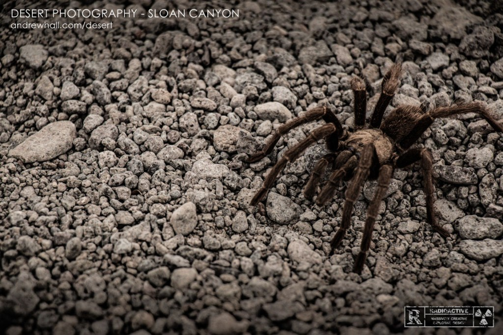 Sloan Canyon Wildlife