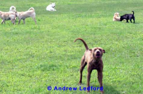 Even dogs with an exceptional history and high levels of confidence need to build some level of acceptance within the group before they can lead.
