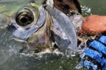 Tarpon Fishing