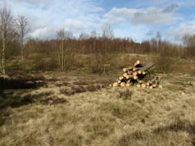 logging-140227-1-800x600