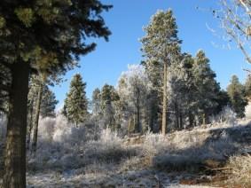 pines-common-2010-800x600