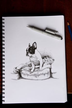 Drawing of dog on a couch cushion