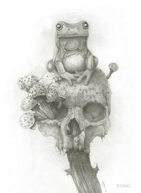 Drawing of frog on a skull that is stuck on a stick