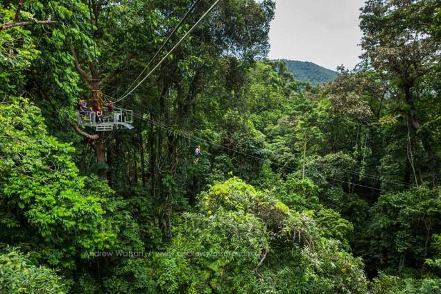 View of tourists zip-lining in Daintree rainforest
