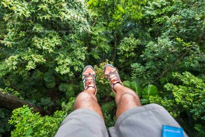 View of feet above Daintree rainforest on ziplining tour