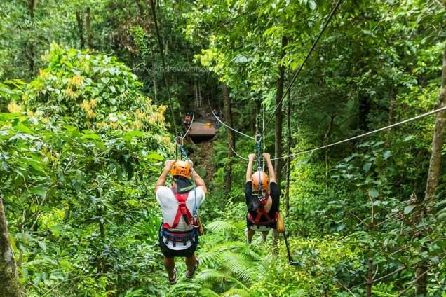 View of couple racing down rainforest zipline