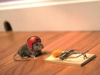 Мышка в каске предусмотрела