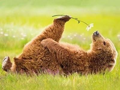 Нежный медведь