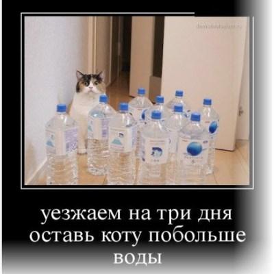 Кот офанарел