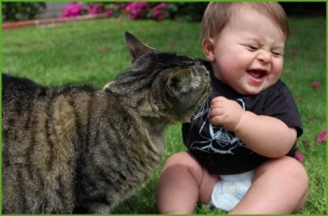Кот рассмешил Cat laugh