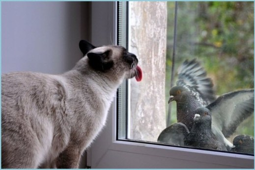 Кот и голуби