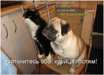 Кот и пёс захотели курицы отведать