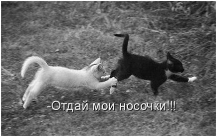 Маленькие кошечки прикольно играют