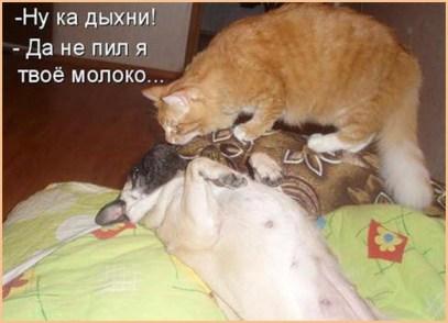 Кошка Муся спорит с псом Трезором