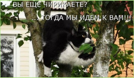 Кошки охотятся на воробьёв
