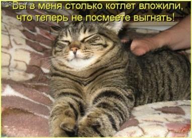 Обнаглевший кот