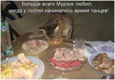 Мурзик уважает кулинарные шедевры