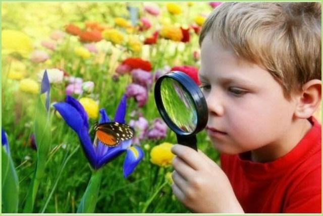 Мальчик увидел бабочку