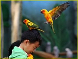 Мальчик и попугаи