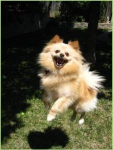 Довольный пёс