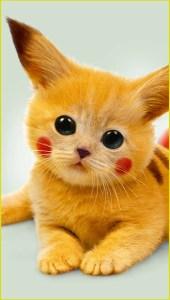 Котёнок на аву