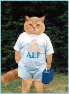 Смешной кот на аву