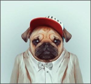 Картинка на аву со псом в смокинге